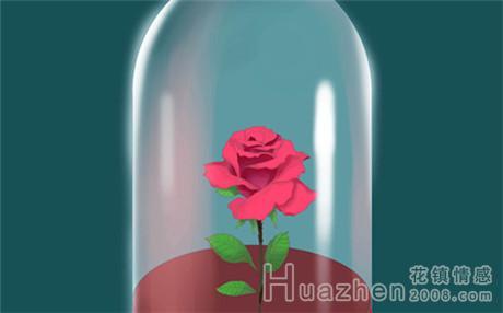 栀子花花语是什么:栀子花的花语有什么含义